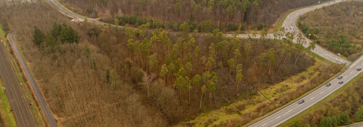 Grundstück Graben Neudorf bewaldet